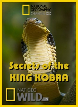 KH154 - Document - Secrets of the King Cobra 2009 (1.5G)